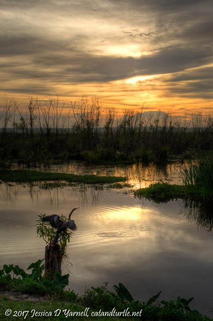 Sunrise at Lake Apopka