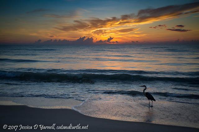 Sunrise at Archie Carr National Wildlife Refuge