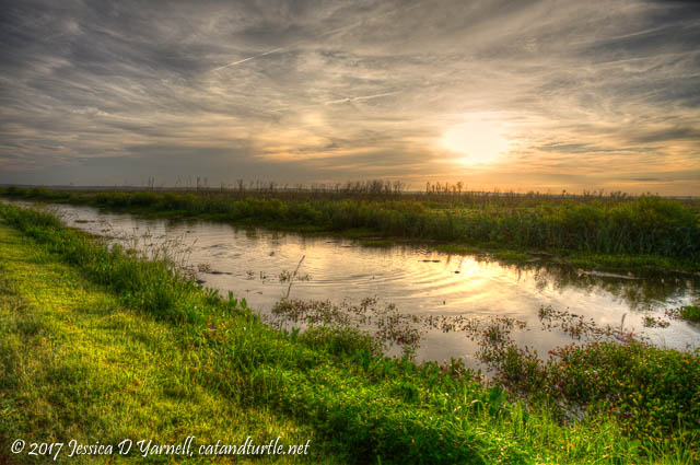 Sunrise at LAWD - Alligators Feeding