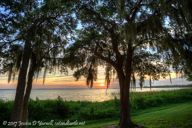 Sunset at Magnolia Park