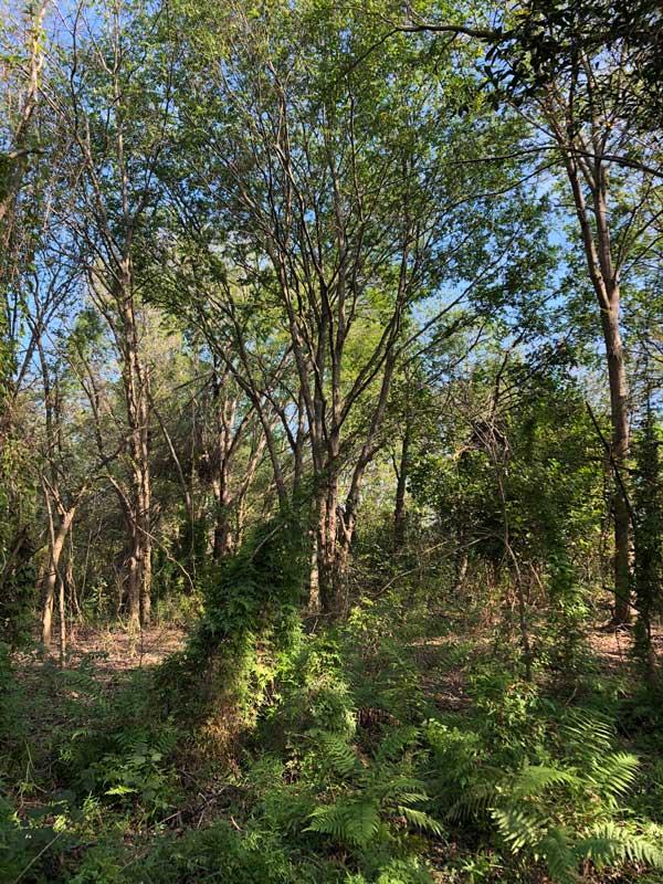 Woods Habitat