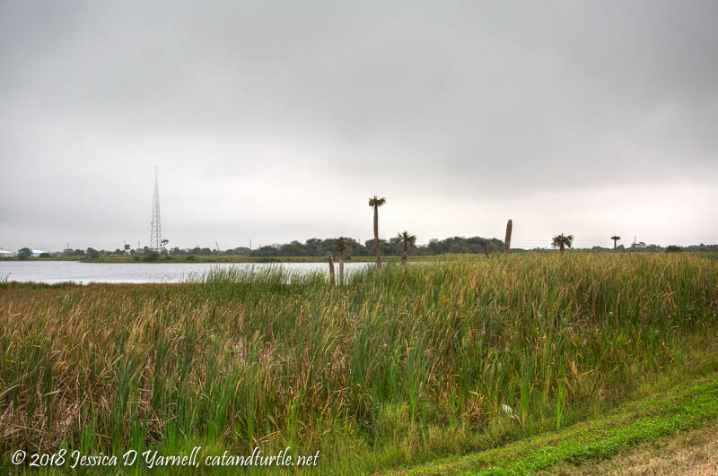 Viera Wetlands Fog-Rise