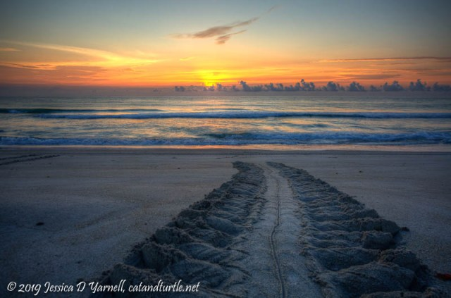 Turtle Tracks at Sunrise