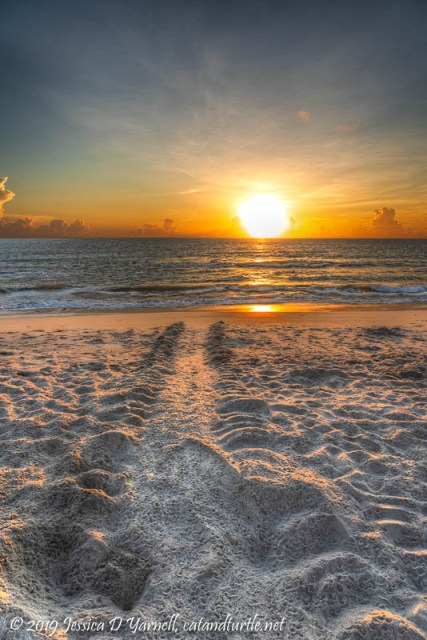 Turtle Tracks at Sunrise - Adult and Hatchling