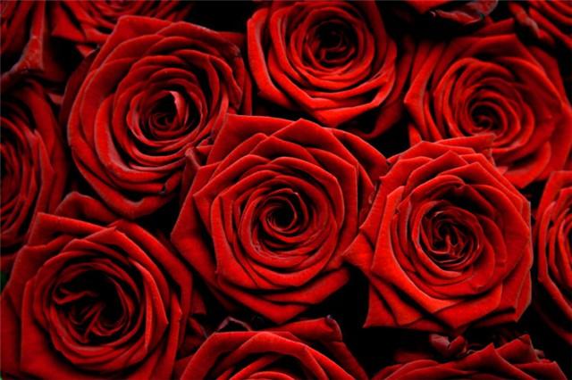Reci mi to ružom – boja ruže i njeno značenje