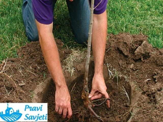 Priprema tla za sadnju voćaka