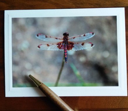 hearts on body of dragonfly blank note card for sale by dorislovadinalee.com