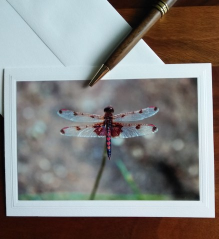 dragonfly note card with wooden pen and envelope photographed by doris lee