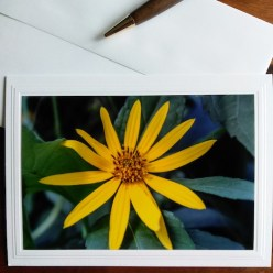 Jerusalem artichoke flower photograph on blank greeting card by doris lovadina-lee