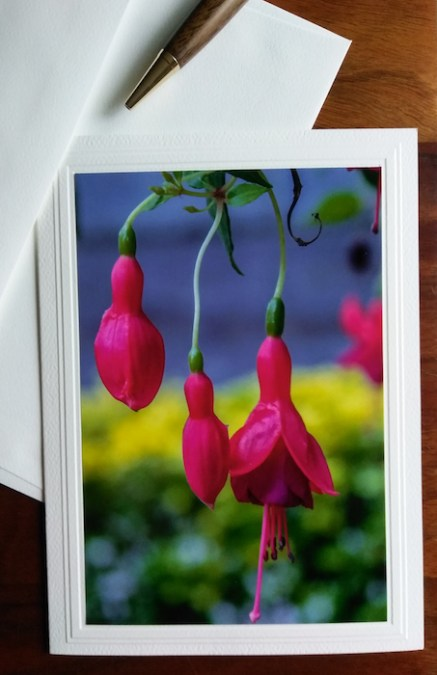 three fuchsias photograph on blank greeting card niagara falls ontario canada