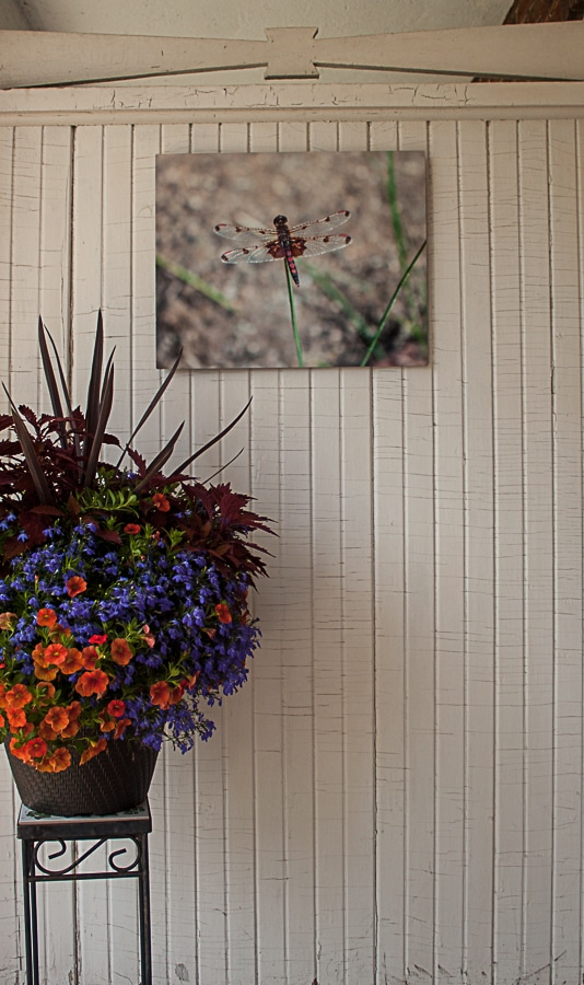 Dragonfly metal photo by Doris Lovadina-Lee on white shiplap wall with flowers