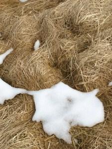 Hay in winter