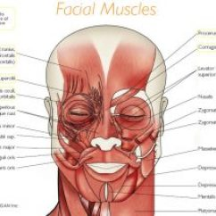 Face Muscles Diagram M16 Upper Receiver Assembly Facial Anatomy | Botox Training Free Resources