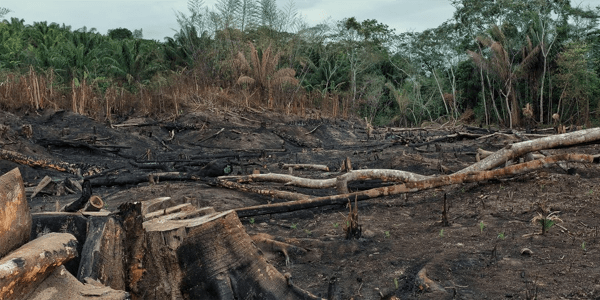 Deforestation leaves investors exposed