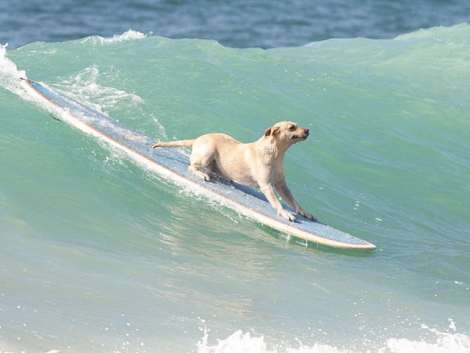 small-dog-big-wave