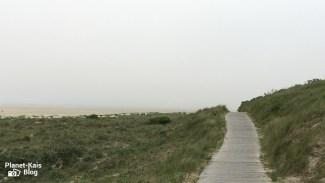 Weg_durch_die_dünen