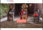 Tindog - Test & Avis
