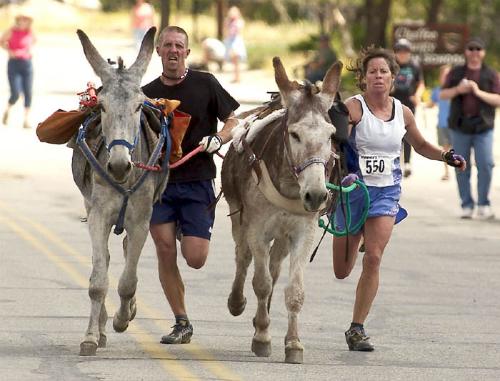 burro racing
