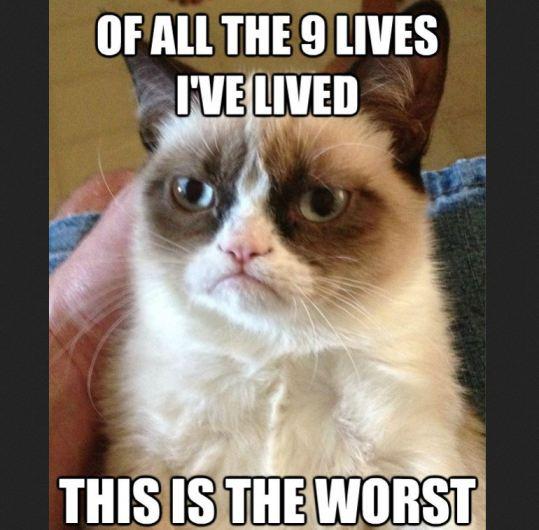 Worst-Grumpy-Cat