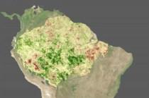 Foto satellitare del forte periodo di siccità del 2005, in verde scuro le aree più rigogliose