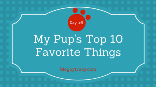 My Pup's Top 10 Favorite Things