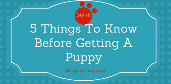 5 Things To Know Before Getting A Puppy