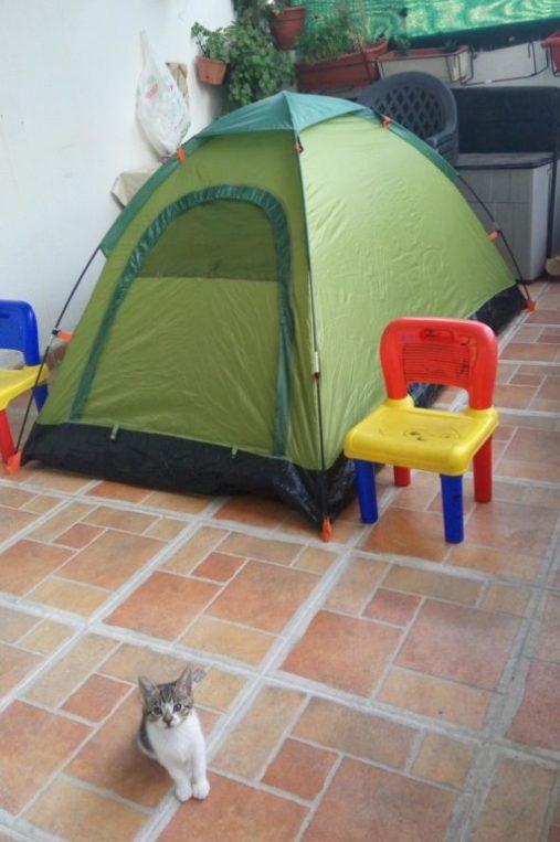 gato-camping-terraza