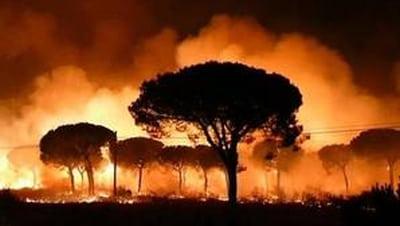 Doñana, un camping arrasado por el fuego.