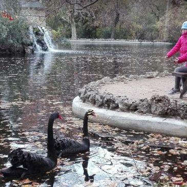 Viaje a Madrid en Caravana. Parte I: El camping Osuna y el parque El Capricho.
