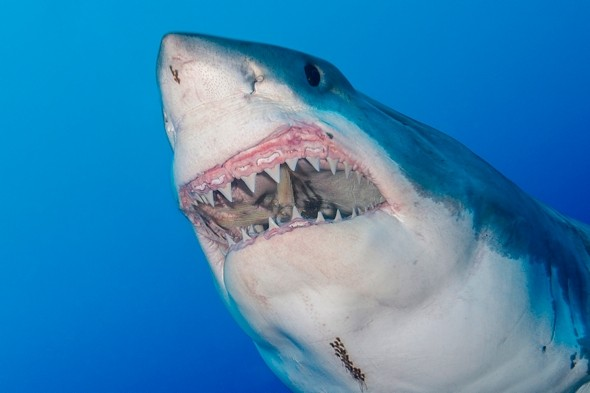 Swimmer bitten in half by great white in South Africa named
