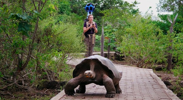 Google Street View Trekker charts the Galapagos Islands, one tortoise at a time
