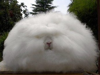 furry rabbit photo