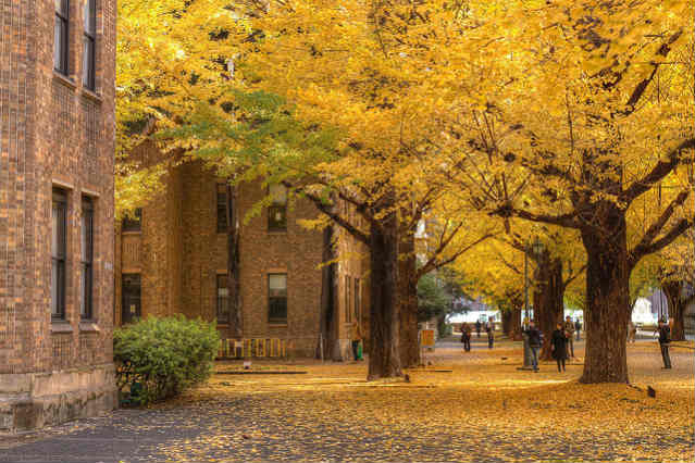 Todai - University of Tokyo | Foto: Chao-Wei Juan, via flickr