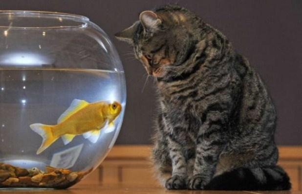 Gato y pez jugando