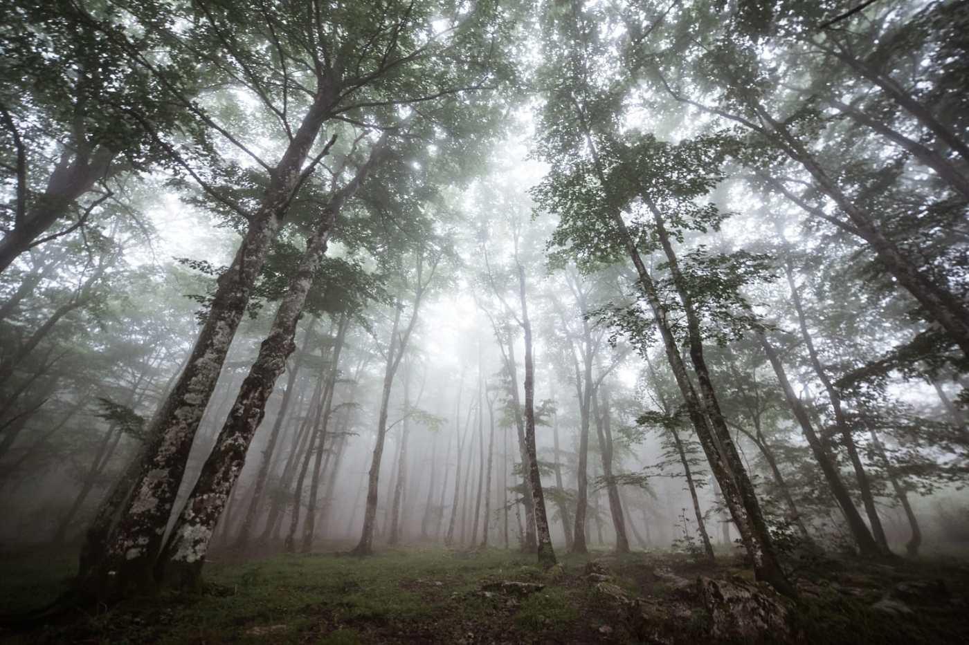 La vida en el bosque