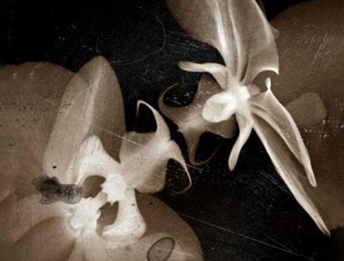 FALLEN - Glimpses - copertina disco - fiori