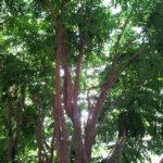 Séjour Center Parcs les 3 forêts, jour 4.