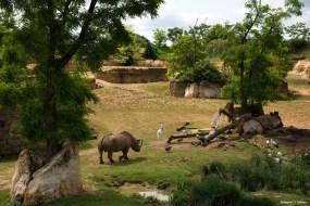 La vallée des rhinocéros