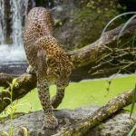 Gagnez 4 places pour visiter Bioparc à Doué-la-Fontaine !