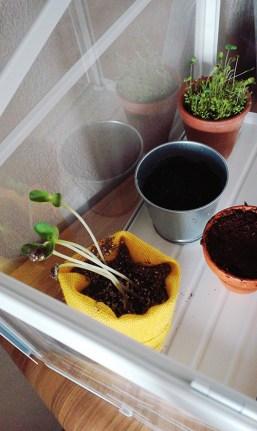 activite_jardinage