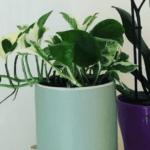 Plant addict : comment j'ai arrêté de tuer mes plantes (ou presque)