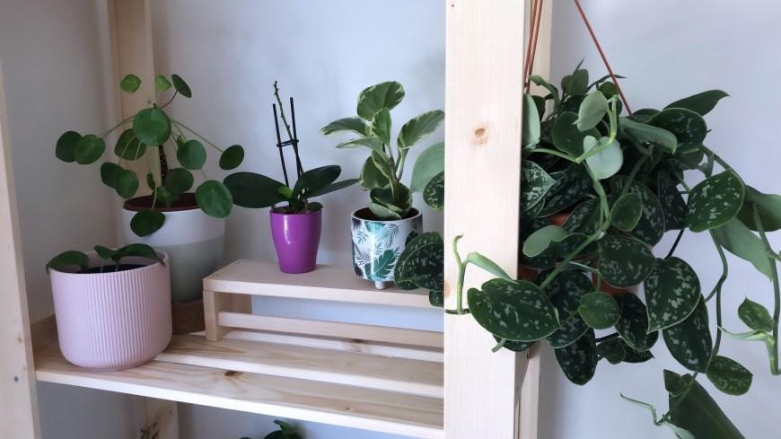 plant tour 2