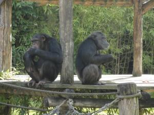 Câline et ? Les Bonobos