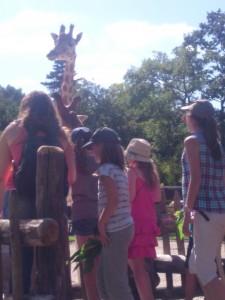 Morgane participant à l'Animation Girafe en donnant à manger à celles ci.