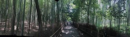 Bosque de bambú Arashiyama header