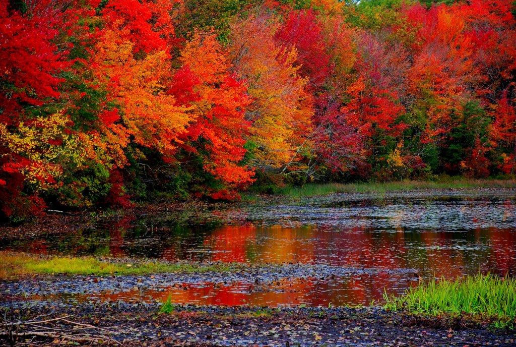 Il foliage  la magia dellautunno dove trovarlo  Blog