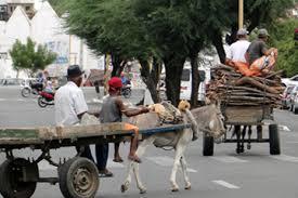 Após ameça de novo de protesto, Prefeitura garante crédito para carroceiros