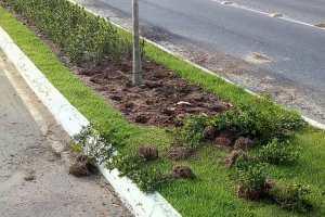 Vandalismo em praças e avenidas gera prejuízo superior a R$ 100 mil na Capital
