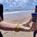 IRRESPONSABILIDADE: Prefeito de Cabedelo acusa catamarãs de 'limpar banheiros' na praia, mas UFPB esclarece que fezes são de tartarugas