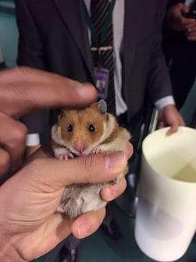 Um dos animais soltos no plenário
